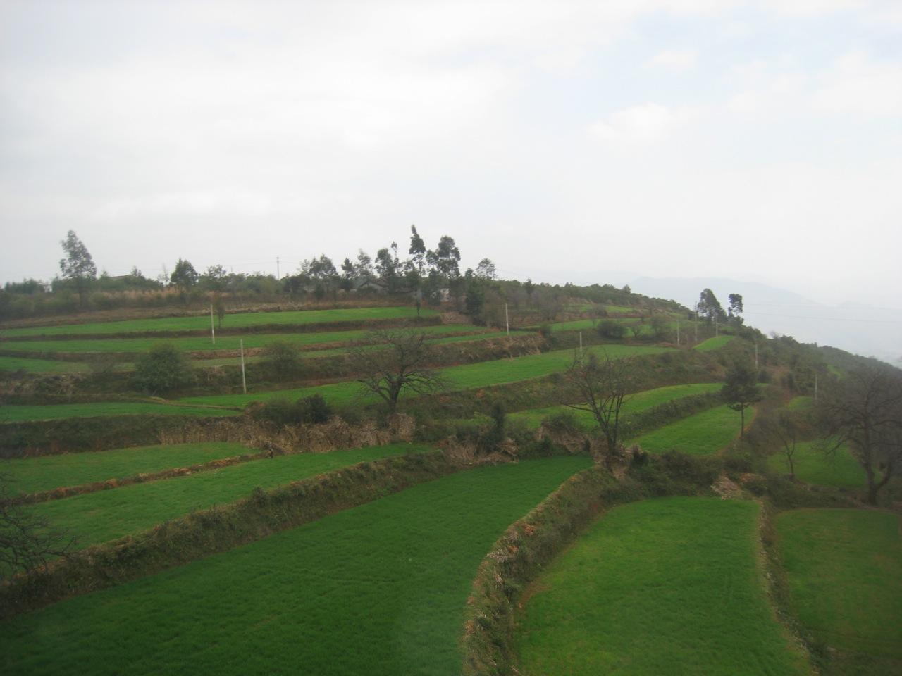 local agriculture